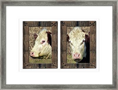 Cow Framed Framed Print by Tina M Wenger