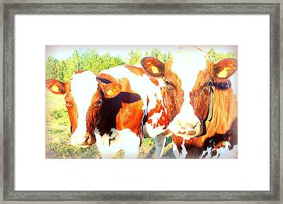 Cows Missing The Boys  Framed Print