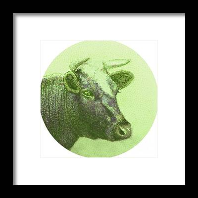 Cow And Calf Framed Prints