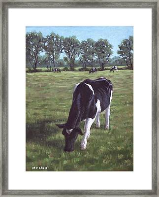Cow In Field At Throop Uk  Framed Print by Martin Davey