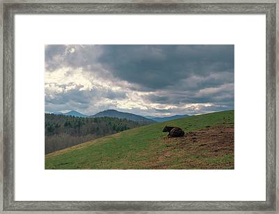 Cow In Pasture Framed Print