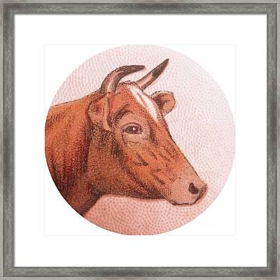 Cow Iv Framed Print by Desiree Warren