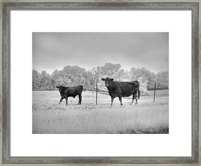 Cow  Framed Print by Jane Linders