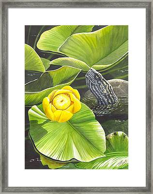 Cow Lily Framed Print by Catherine G McElroy