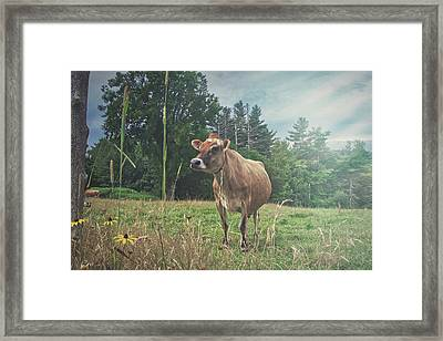 Cow On The Hill Framed Print