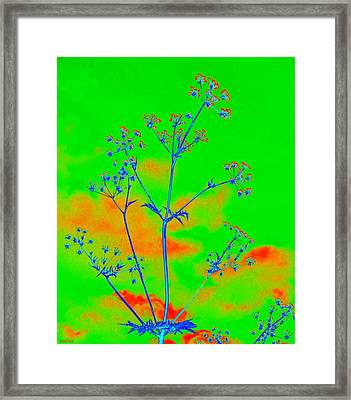 Cow Parsley Blossom 4 Framed Print by Martine Murphy