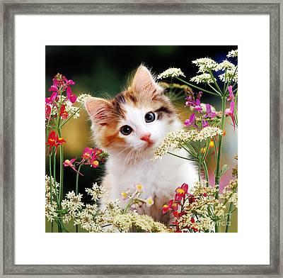 Cow Parsley Cat Framed Print