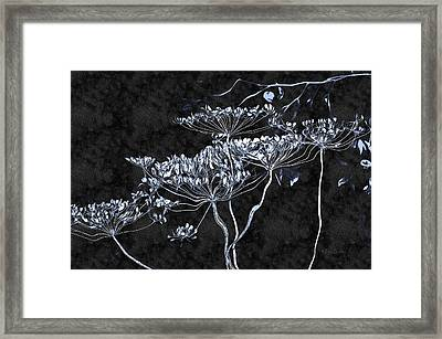 Cow Parsnip Framed Print