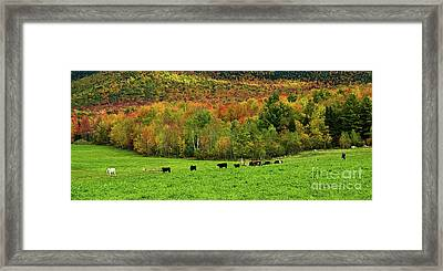 Cow Pasture In Fall Framed Print