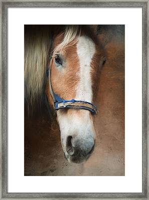 Framed Print featuring the photograph Cow Pony by Robin-Lee Vieira