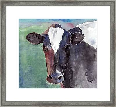 Cow Portrait Framed Print by Arline Wagner