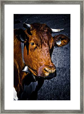 Cow Portrait Framed Print