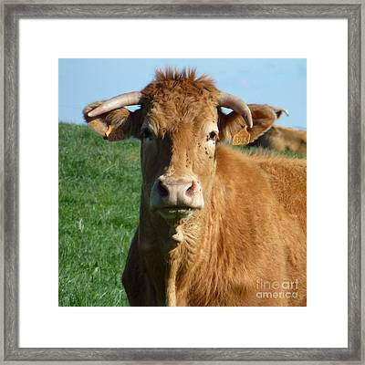 Cow Portrait Framed Print by Jean Bernard Roussilhe