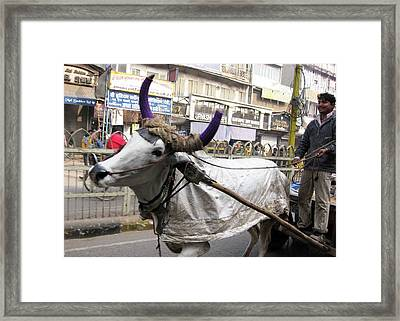Cow Pulling Cart Framed Print by David L Griffin