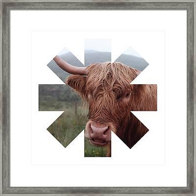 Cow Framed Print by Rhcp