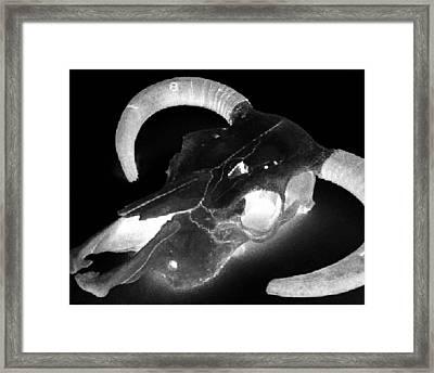 Cow Skull Framed Print by Joseph Frank Baraba