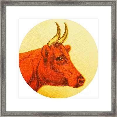 Cow V Framed Print by Desiree Warren