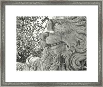 Cowardly Lion Framed Print by JAMART Photography