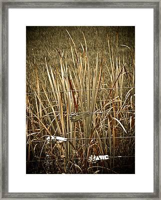 Cowboy Fence Framed Print by Marilyn Hunt