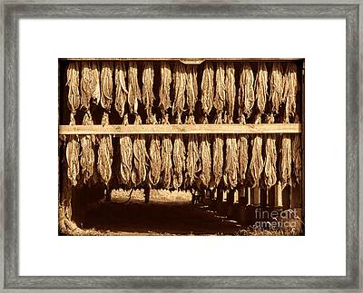 Cowboy Staple Framed Print by American West Legend By Olivier Le Queinec