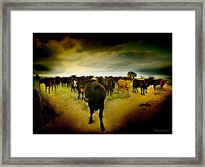 Cowfrontation Framed Print by Brian Gustafson