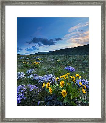 Cowiche Spring Sunset Framed Print by Mike Dawson