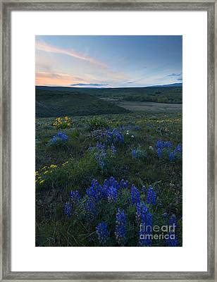 Cowiche Wildflower Sunset Framed Print