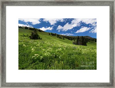 Cowparsnip On Mountainside Framed Print