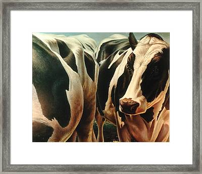 Cows 1 Framed Print