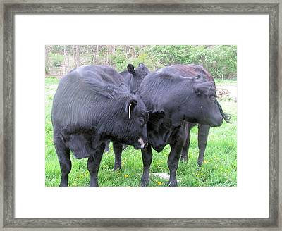 Framed Print featuring the photograph Cows 2 Shy by Barbara Giordano