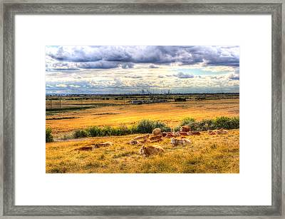 Cows And A Passing Train Framed Print