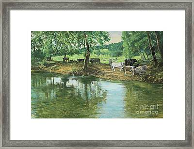 Cows And Creek Framed Print by Don Langeneckert