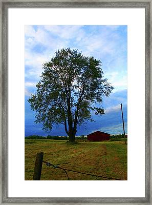 Cows Come Home Framed Print