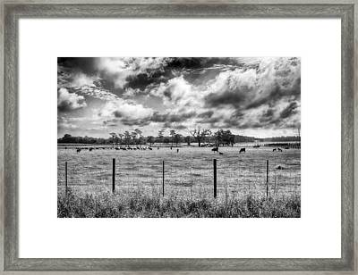 Framed Print featuring the photograph Cows by Howard Salmon
