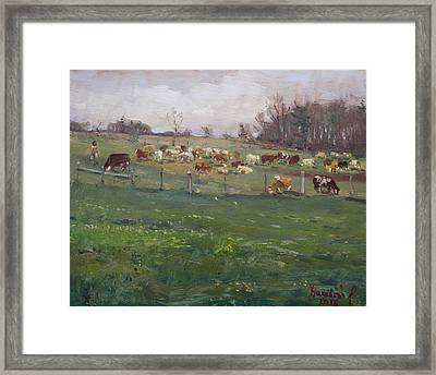 Cows In A Farm, Georgetown  Framed Print