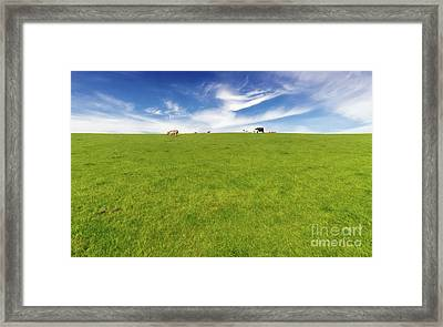 Cows In A Pasture Framed Print by Adrian Evans