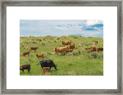 Cows In Field 3 Framed Print