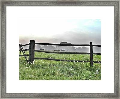 Cows In Field Framed Print by Bill Cannon
