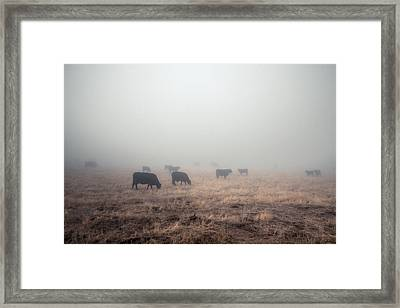 Framed Print featuring the photograph Cows In Fog - Color by Alexander Kunz