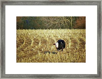 Cow's In The Corn Framed Print by Nikolyn McDonald
