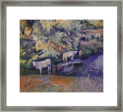 Cows In The Geul Framed Print