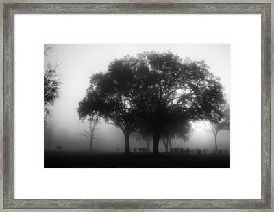 Cows In The Mist Framed Print by David Mcchesney