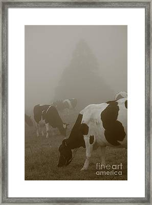 Cows In The Mist Framed Print by Gaspar Avila