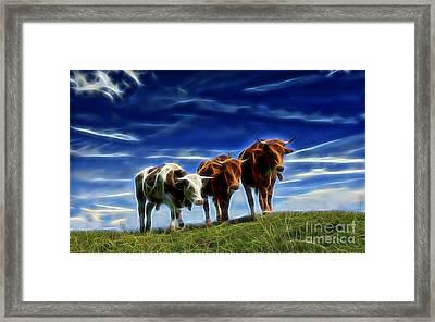 Cows Framed Print by Marvin Blaine