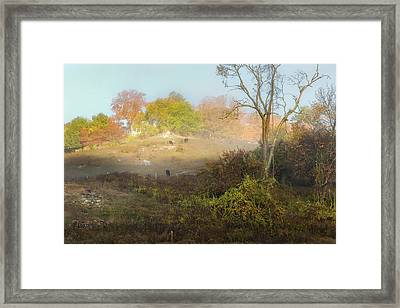 Cows Of The Fog Framed Print by Bill Wakeley