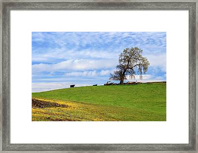 Cows On A Spring Hill Framed Print