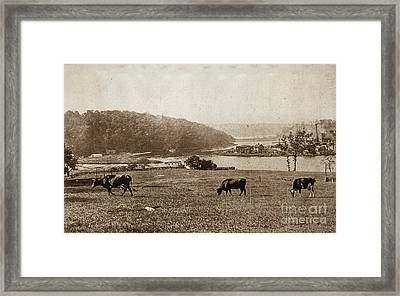 Framed Print featuring the photograph Cows On Baker Field by Cole Thompson