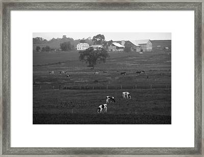 Cows On The Farm Black And White Framed Print