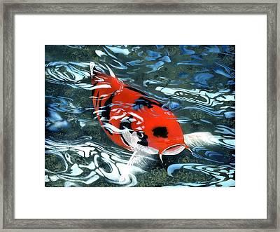 Coy Koi Framed Print by Charles Parks