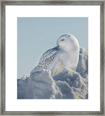 Framed Print featuring the photograph Coy Snowy Owl by Rikk Flohr